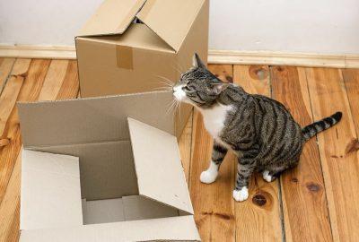 [香港搬屋公司推薦] 與寵物一起搬家的5條提示